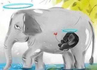 Malabar News_ elephant death