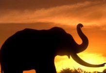 MalabarNews_elephant