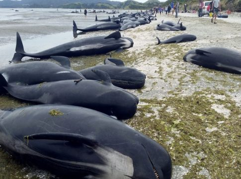 whales_malabar news
