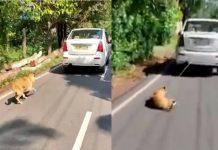 Dog Tied On Car In Kochi