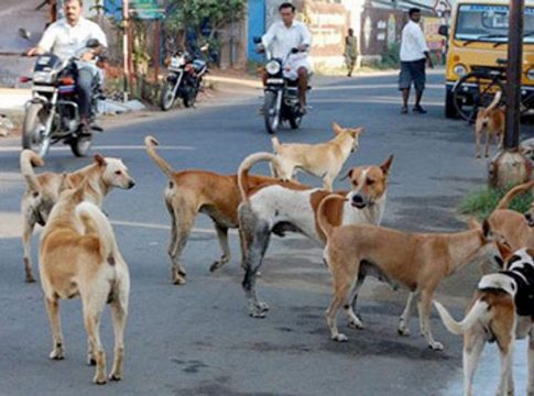 Street dogs attack in pariyaram