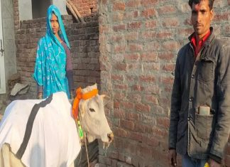 calf son_malabar news
