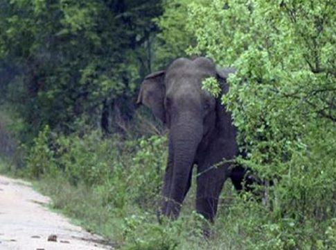 wild elephant attack_palakkad