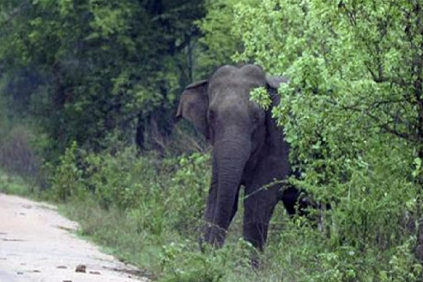wild elephant attack_Malabar news