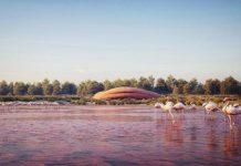 Abu Dhabi Flamingo Sanctuary