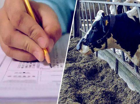 holy cow exam
