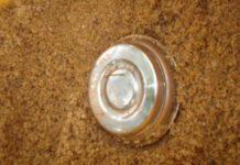 nadapuram-steel-bomb-found