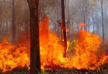 Wildfire-in-Wayanad