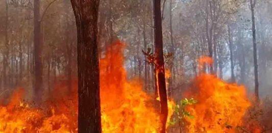 Wildfire-in-Wayanad