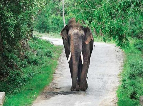 wild elephant in kannur