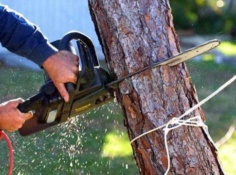 cutting-trees