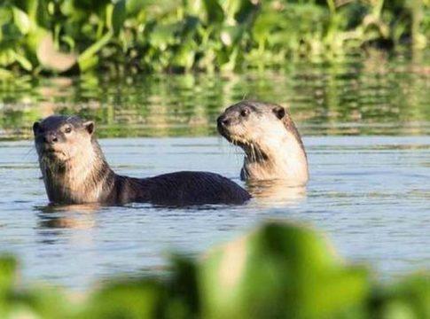 otter attack_kozhikode