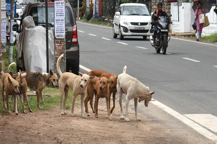 street dogs in wayanad