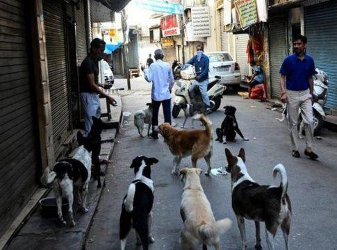kozhikode street dogs