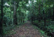 kelakam forest