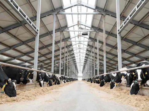 One month since the government closed dairy farms; The cows could not be auctioned