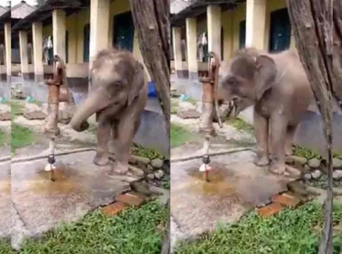 elephant-drinking-water-by-hand-pump-interesting-video