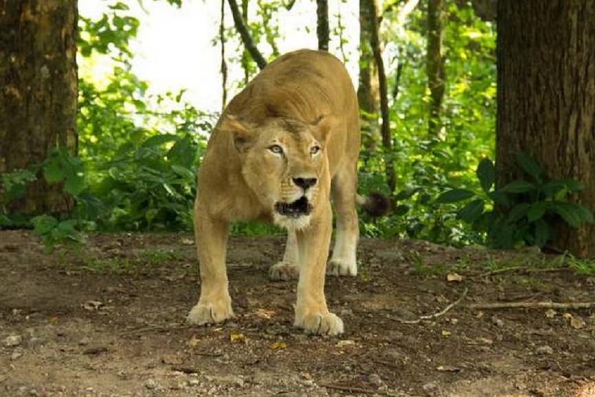 Lion-Bindu