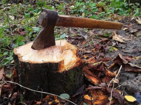 MalabarNews_wood smuggling