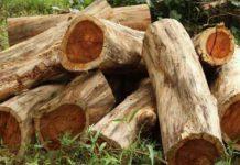 Rosewood timber smuggling