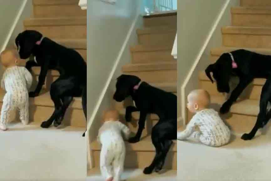 'Do not climb stairs, will fall'; The dog protecting baby