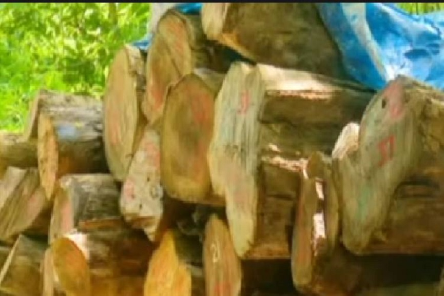 The timber will be confiscated by the government