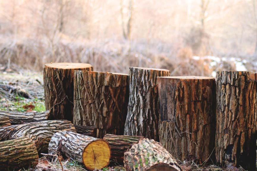 Wayanad tree felling case