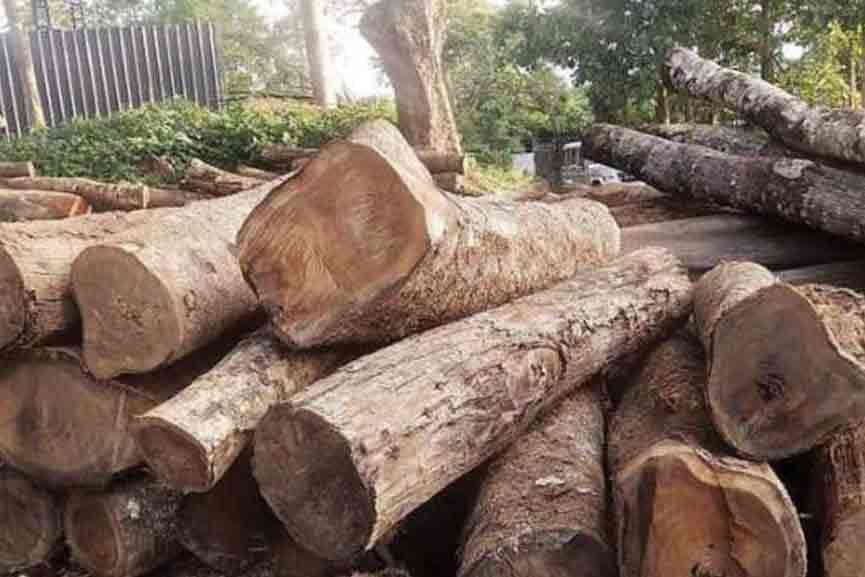 Wood-Smuggling