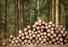 Wood smuggling