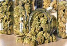 cannabis seized kozhikode