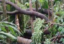 heavy rain destructions