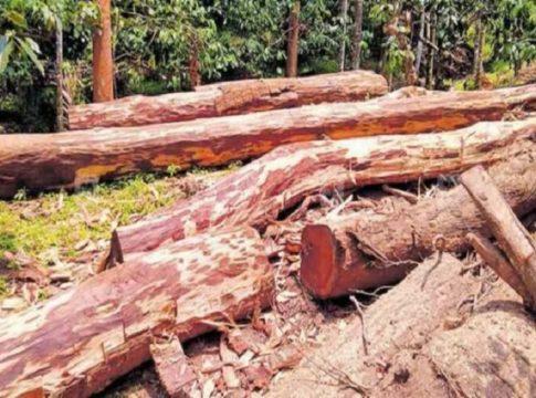 muttil-wood-cut-case