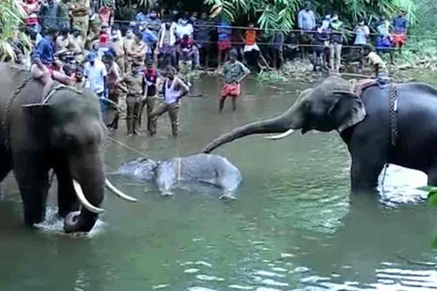 Pregnant wild elephant killed; The main culprits could not be apprehended for a year