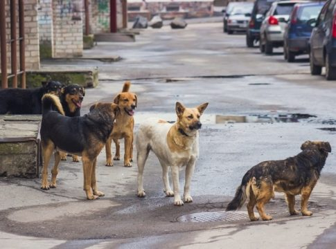 Street dogs attack
