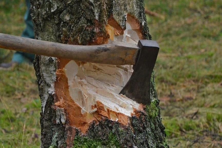 tree cut_muttil