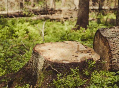 tree felling case