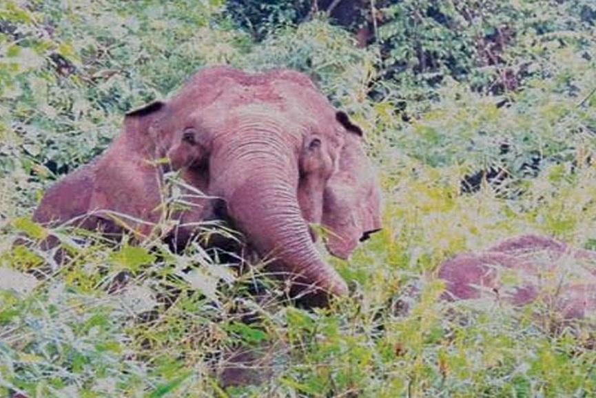 wild elephant in Kozhikode