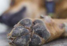 Animal-Cruelty