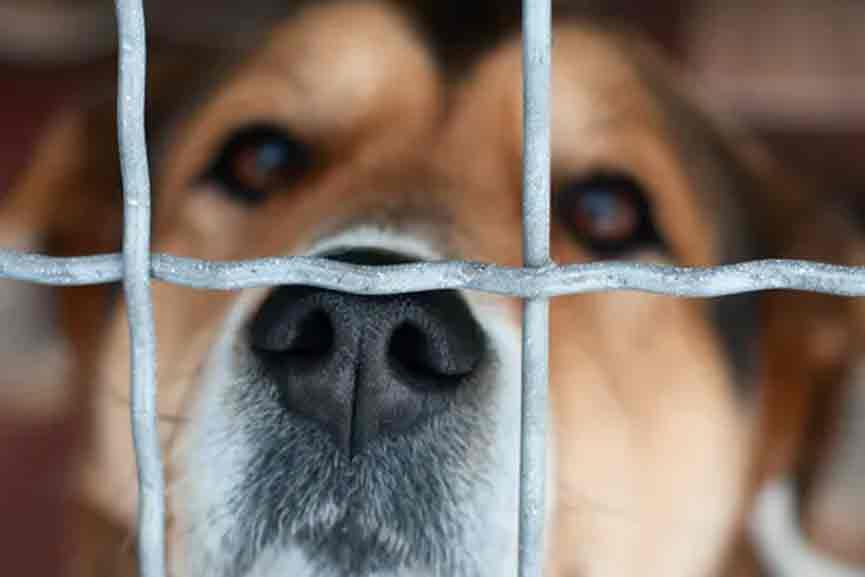 Cruelty-against-Dog