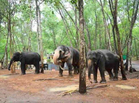 Elephant-in-Kotoor