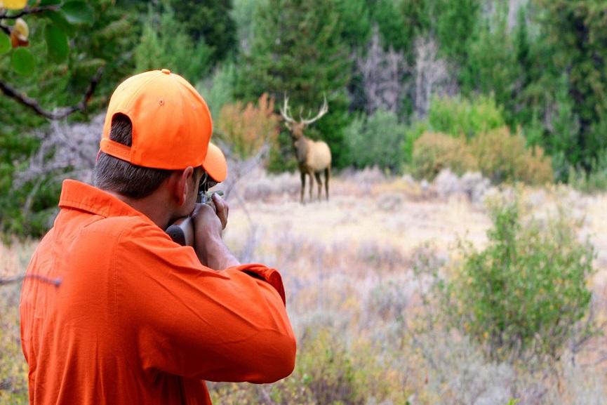 Nelliyambathy Deer Hunting