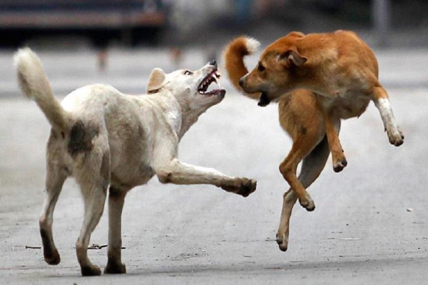 dogs attakes in kalppatta