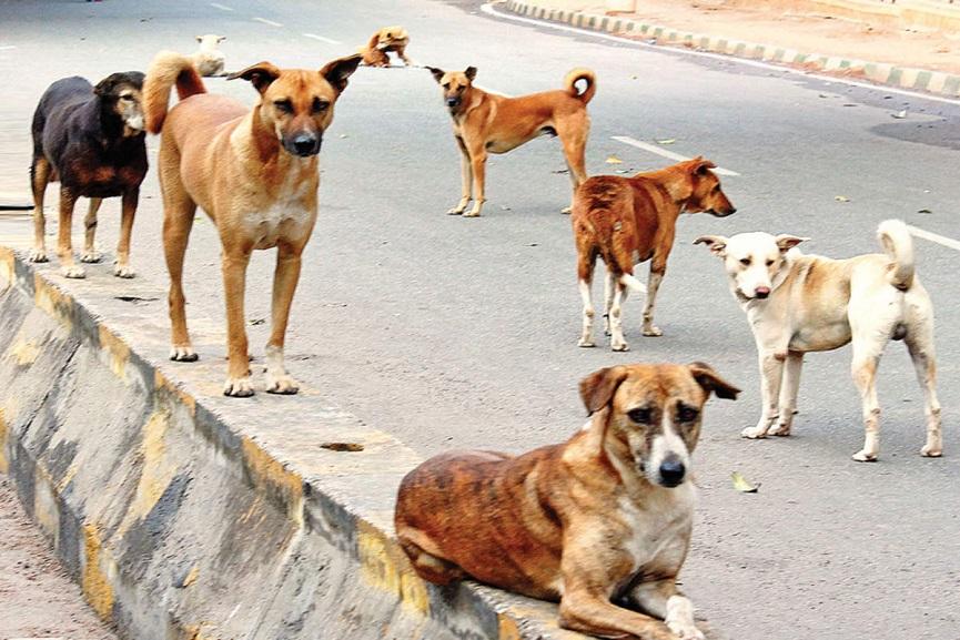 Street Dogs Issue Kannur