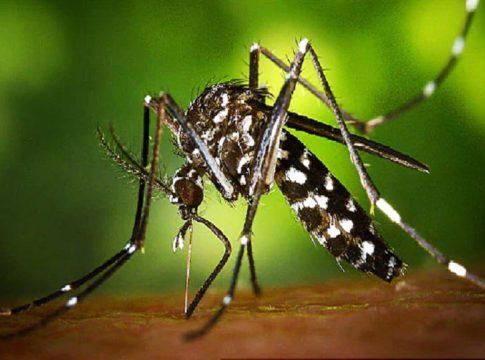 Zika Virus-kerala