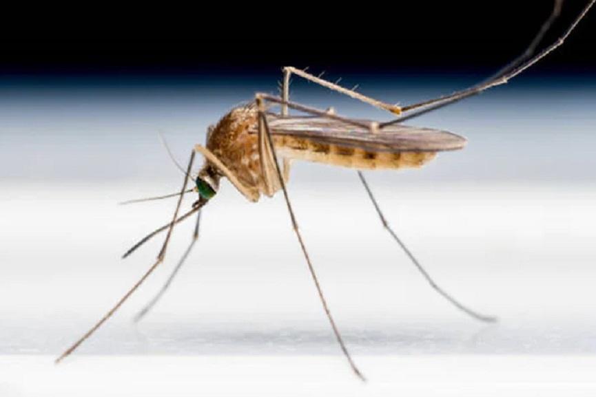 Zika virus-kerala-new case