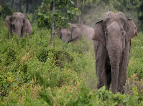 wild elephant-destroys crops-kannur