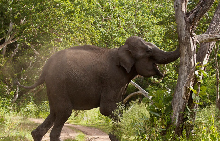 kannue elephent attack