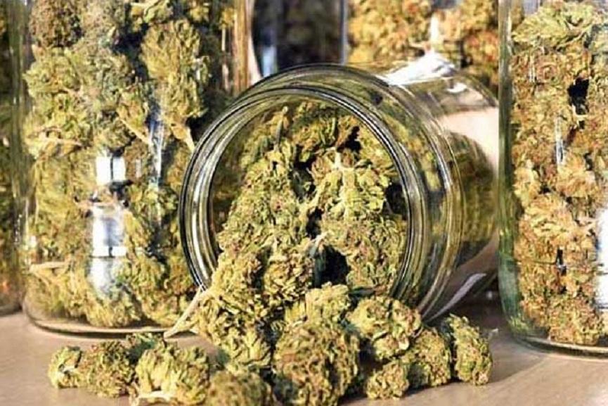 cannabis case palakkad