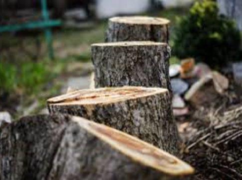 muttil tree cutting case