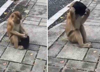 Monkey's-Viral-Video